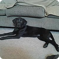 Adopt A Pet :: Sarah - Lewisville, IN
