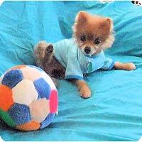 Adopt A Pet :: Alex - Mooy, AL
