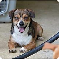 Adopt A Pet :: Smokey - New Boston, NH