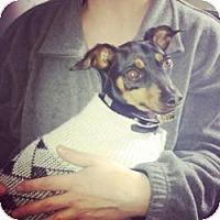 Adopt A Pet :: Ginger - Hancock, MI