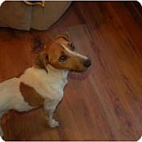 Adopt A Pet :: Max - Seneca, SC