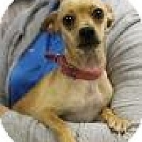 Adopt A Pet :: Lissa - Marlton, NJ