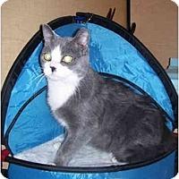 Adopt A Pet :: Luke aka Lukee - Jenkintown, PA