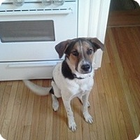 Adopt A Pet :: Wilco 12 months old - Marlton, NJ