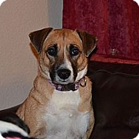 Adopt A Pet :: Carla - Fort Worth, TX