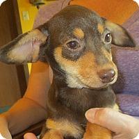 Adopt A Pet :: Javier - Allentown, PA