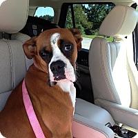 Adopt A Pet :: Benton - Brentwood, TN