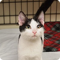 Adopt A Pet :: Domino - Ocean City, NJ