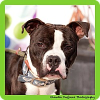 Adopt A Pet :: Oozie - Long Beach, NY