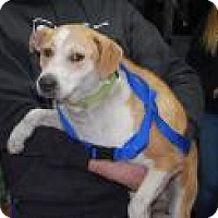 Adopt A Pet :: Louie - Brooklyn, NY