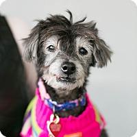 Adopt A Pet :: Grandma Nelly - Los Angeles, CA