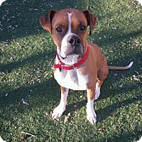 Adopt A Pet :: Pecan - Phoenix, AZ