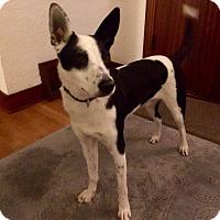 Adopt A Pet :: Nash (courtesy listing) - Gig Harbor, WA