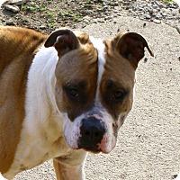 Adopt A Pet :: Misty! - Sacramento, CA