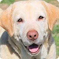 Adopt A Pet :: MISS IZZY(TRAINED-A TRUE LADY! - Wakefield, RI