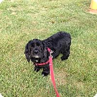 Adopt A Pet :: Audi - Kannapolis, NC