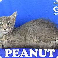 Adopt A Pet :: Peanut - Carencro, LA