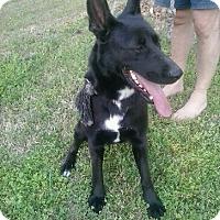 Adopt A Pet :: Jazzy - Kittery, ME