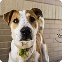 Adopt A Pet :: Maybelline (Cosmetics Litter) - Mooresville, NC