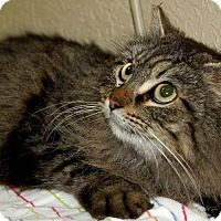 Adopt A Pet :: Miss Thang - Modesto, CA
