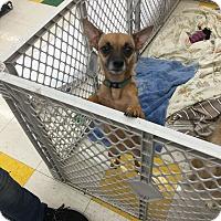 Adopt A Pet :: Raina - Joliet, IL