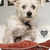 Adopt A Pet :: Cool Hand Luke - Inglewood, CA