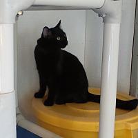 Adopt A Pet :: Pogo - Geneseo, IL