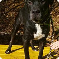 Adopt A Pet :: Morris - Pottsville, PA
