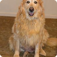 Adopt A Pet :: Marigold - Prole, IA