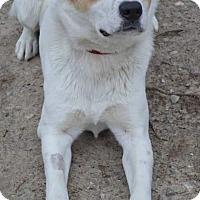Adopt A Pet :: Rex - Livonia, MI