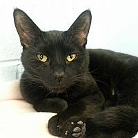 Adopt A Pet :: Jezebel - Shinnston, WV