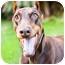 Photo 3 - Doberman Pinscher Dog for adoption in Santee, California - Jonas