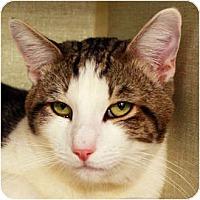 Adopt A Pet :: Drew - Los Angeles, CA