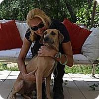 Adopt A Pet :: Heidi - Eustis, FL