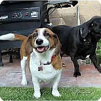 Adopt A Pet :: DC - Phoenix, AZ