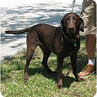 Adopt A Pet :: Nolan - Kingwood, TX