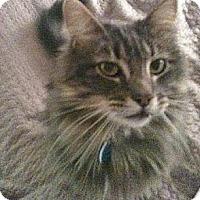 Adopt A Pet :: Asa - Davis, CA