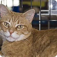 Adopt A Pet :: Cassidy - New Port Richey, FL