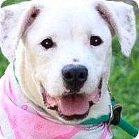 Adopt A Pet :: WYNDY - Wakefield, RI
