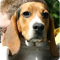 Adopt A Pet :: Hobbes - Portland, OR