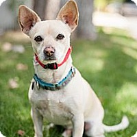 Adopt A Pet :: Legend - Santa Monica, CA