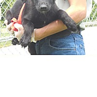 Adopt A Pet :: Male BC2 - Kendall, NY