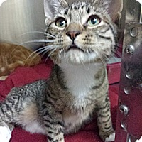 Adopt A Pet :: Crash Bandicoot - Richboro, PA