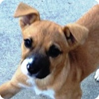 Adopt A Pet :: Dixie-Adopted - Turnersville, NJ