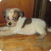 Adopt A Pet :: Ruidoso - Middletown, RI