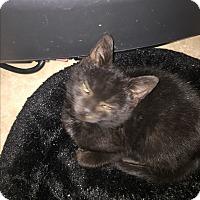 Adopt A Pet :: Stuart (funny) - Sterling Hgts, MI