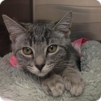 Adopt A Pet :: Moosh - East Brunswick, NJ