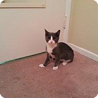 Adopt A Pet :: Silverado - San Fernando Valley, CA