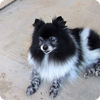 Adopt A Pet :: Pandy - San Diego, CA