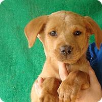 Adopt A Pet :: Polar - Oviedo, FL